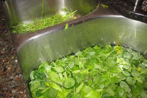 Destemmed-lettuce-1