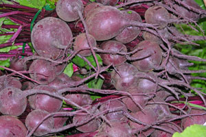 Beets-2