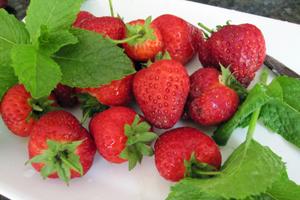 Minty-berries-1