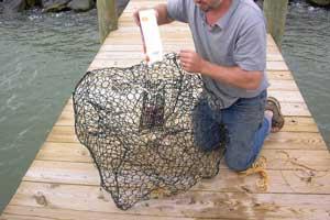 Baiting-crab-traps