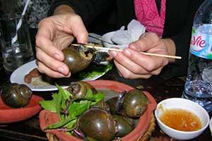 Vietnam_Snails-2