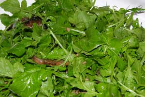 Porto-salad