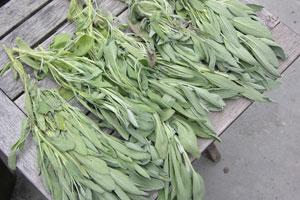 Sage-drying
