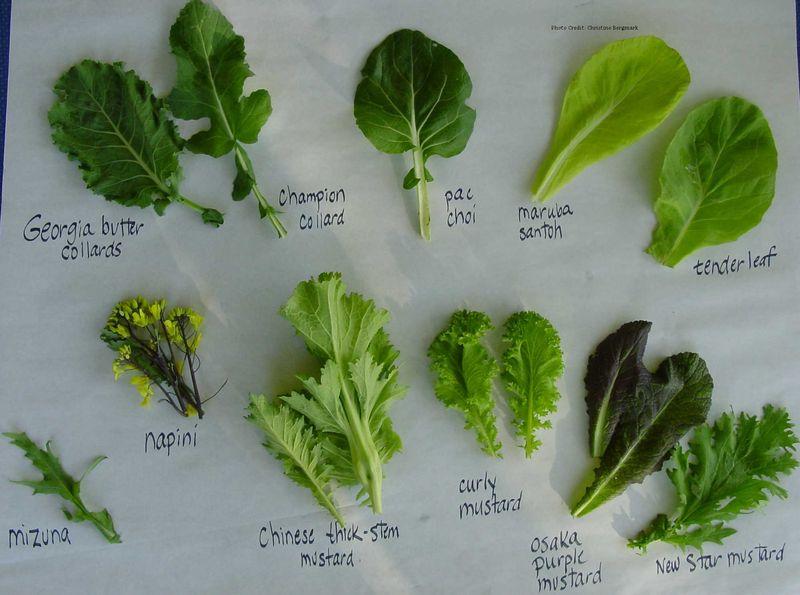 Lettuce-Guide