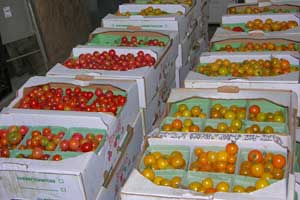 Cases-of-cherry-tomatoes