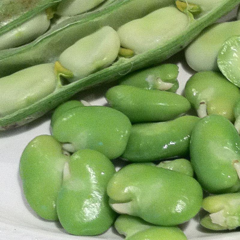 Fava-Beans-2